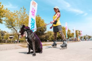 6 Exercises You Can Do with Your Dog