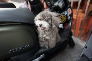 How to Travel with Your Dog: 3 Top Useful Tips